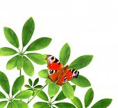 Summer frame with green leaves and butterfly. Isolated on white background