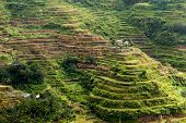 Famous rice fields terraces in the banaue village in Philippines