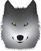 grey wolf with green eyes vector on white
