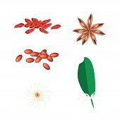 A Set Of Star Anise On White Background