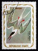 Postage Stamp Haiti 1975 Roseate Tern, Seabird