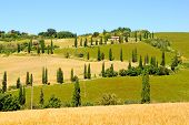 Tree lined lanes of Tuscany