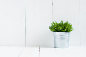pic of paint pot  - Spring green home plant in a metal pot on a background of white - JPG