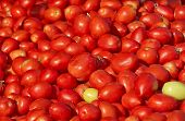 Israel Market Produce: Fresh Red Tomatoes