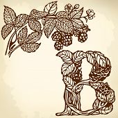 Blackberries on a branch brown B