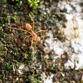 Brave Ant