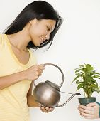 picture of pacific islander ethnicity  - Pacific Islander woman watering potted plant - JPG