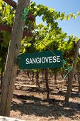 Sangiovese Signpost Of California