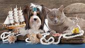 cat and dog, dachshund and british cat