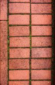 Pavestone With The Moss Between The Bricks
