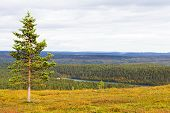 stock photo of laplander  - Beautiful autumn ruska colours in Lapland - JPG