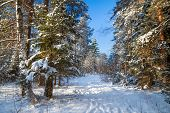Winter Landscape With The Forest And A Footpath