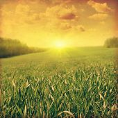 Grunge image of summer landscape at sunset.