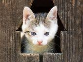 Baby Kitty Cat Portrait