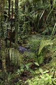Lush foliage and stream in a rain forest