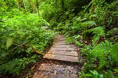 Trekking Trail At Jungles Of Ropical Rain Forest. Thailand