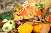 Autumn vegetable close-up
