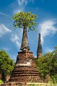 Asian Religious Architecture. Ancient Ruins With Growing Trees Under Blue Sky. Ayutthaya, Thailand