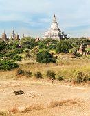 Buddhist Temples at Bagan Kingdom Myanmar (Burma)