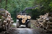 foto of tractor trailer  - Tractor loading wooden trunks on trailer in forest - JPG