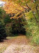 lane through colored trees