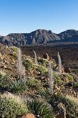 Landscape El Teide