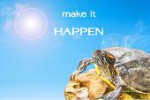picture of craw  - metaphor of make it happen with turtle and sun background - JPG