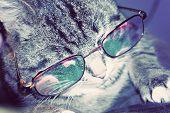 Striped Cat In Eyeglasses