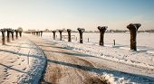 stock photo of snowy-road  - Tire tracks on a snowy country road with pollard willows along both sides of the road - JPG