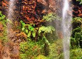 Ferns And Tropical Waterfall