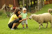 image of tame  - Mother and son feeding the tame sheep - JPG