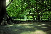 foto of royal botanic gardens  - Sunlit trees in the Royal Botanic Gardens - JPG
