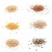 Organic Seeds: Corn, Flax, Buckwheat, Wheat, Pumpkin Seed, Sunflower Seeds