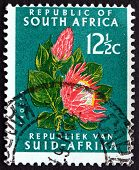 Postage Stamp South Africa 1961 Protea Flower