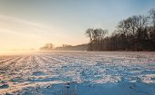 stock photo of maize  - Large field with stubble of fodder maize covered with a layer of snow at approaching twilight in a very special light - JPG