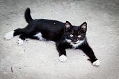 Black Kit