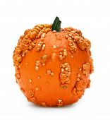 picture of bump  - Pumpkin with bumps isolated on white background - JPG