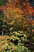 Fall Colors at Sundance, Provo Canyon, Utah