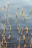 picture of marsh grass  - Forest Lake with reflections and blade of grass - JPG