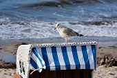 a seagull on a beach chair