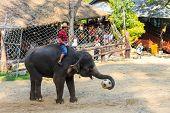 Elephant Catch Football And Prepare To Kick It