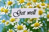 Get well card with chamomile flowers