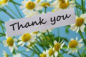 picture of chamomile  - Thank you card with chamomile flowers - JPG