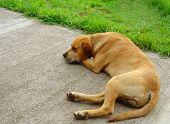 Rocco Dog