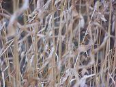Wheat Grass 4