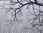 image of sleet  - Editable vector illustration of bare branches in winter weather - JPG