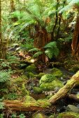 Tranquil rainforest respite, with softly-flowing creek, moss-covered boulders and logs, and tree fer