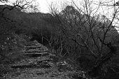 Stairway In Sainte-Baume