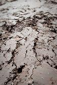 Dried mud with deep cracks