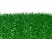 Detailed Grass